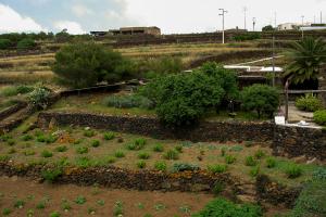 Coltivazioni - Giardini di Pantelleria