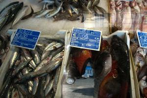 Pesce - Giardini di Pantelleria